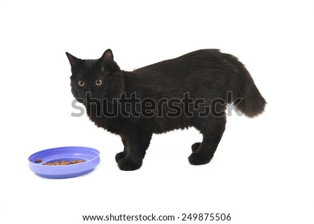 Black cat standing next to a plate with food against a white background - stock photo