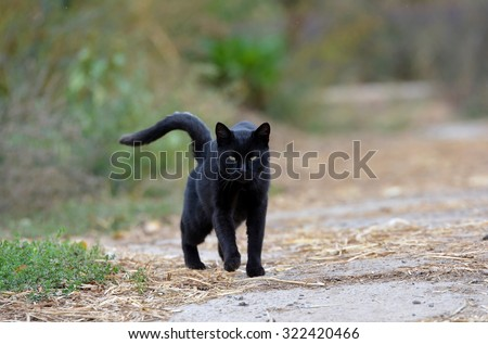 Black cat walking down the street - stock photo
