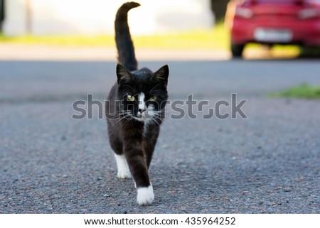 Black cat walking down the street - stock photo