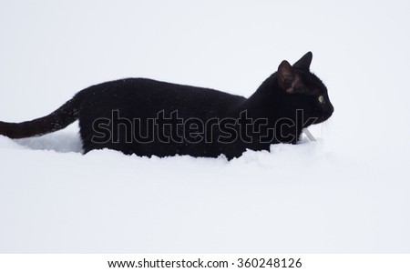 Black  cat walking in the white snow - stock photo