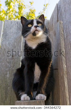 black cat walking on the fence in the garden - stock photo
