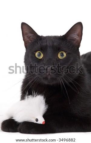 Black cat & White mouse - stock photo