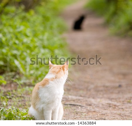 black cat - white tomcat - stock photo
