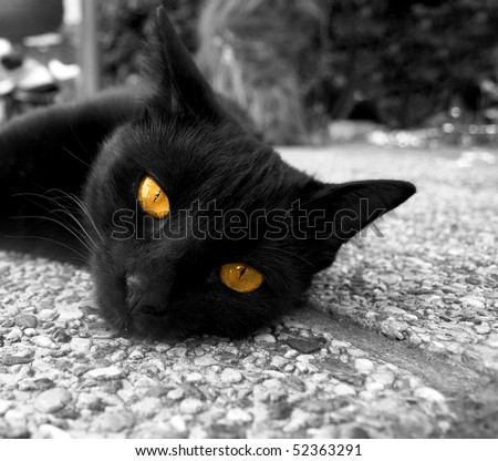 Black cat with golden eyes - stock photo