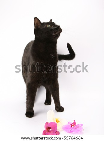 Black cat with orchid flowers at his feet - stock photo
