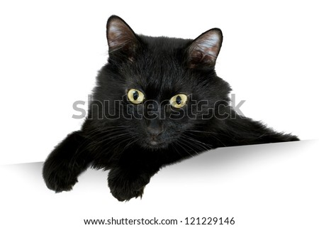 black Cat with white banner