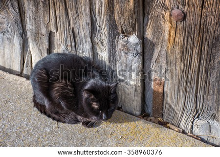 Black cat with white whiskers in siesta - stock photo