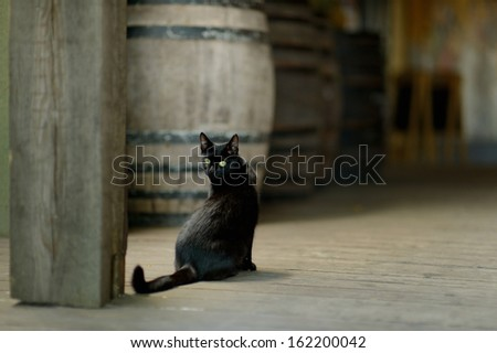 Black cat with yellow eyes in an old winery - stock photo