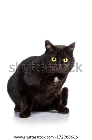 Black cat with yellow eyes isolated on white