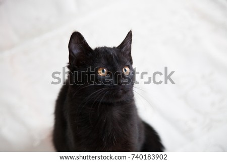 Black cat with yellow eyes lies on a sofa.