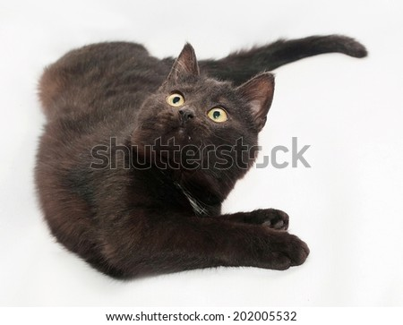 Black cat with yellow eyes lying, bent, on gray background