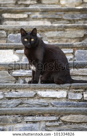 Black cat with yellow eyes on a staircase - stock photo