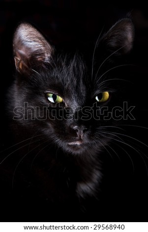 Black cat with yellow eyes on black background - stock photo