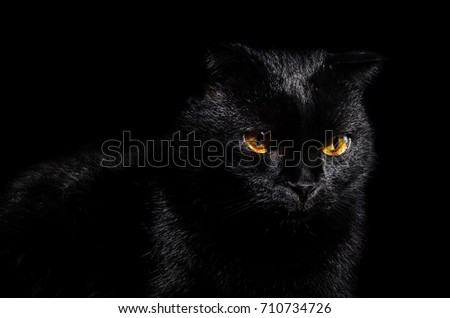 black cat with yellow eyes on the black background