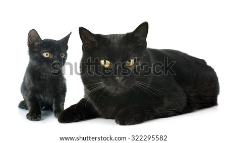 black cats in front of white background