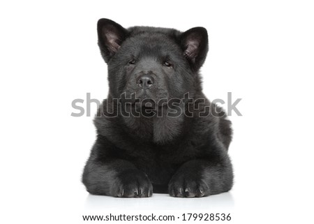 Black Chow-chow long-haired puppy lying on white background - stock photo