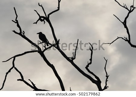 black crow perched on a leafleass tree branch silhouette