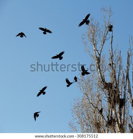 Black Crows. presenta Georgia provide Tagged Fernando MALLORCA related online