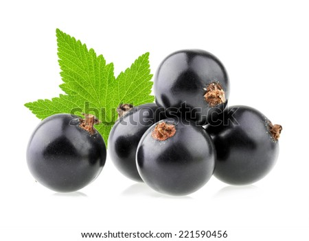 black currant isolated - stock photo