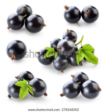 Black currant isolated on white. Collection - stock photo