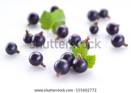 Black currant on white background - stock photo