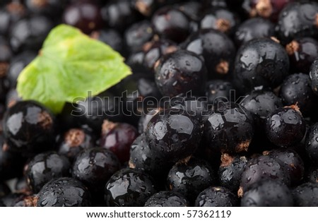 Black currant with drops of water and green leaf - stock photo