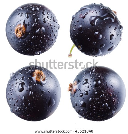 Black currant with drops on white - stock photo