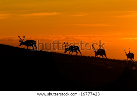 black deers silhouettes on orange sunset sky background - stock photo
