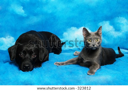 Black dog and grey cat