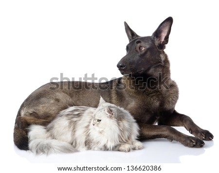 Black dog and persian cat together. isolated on white background - stock photo