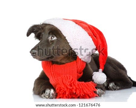 black dog in red christmas Santa hat, isolated on white background - stock photo