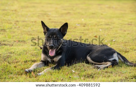 Black dog lying on the haystack