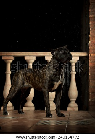 black dog on the porch at night - stock photo
