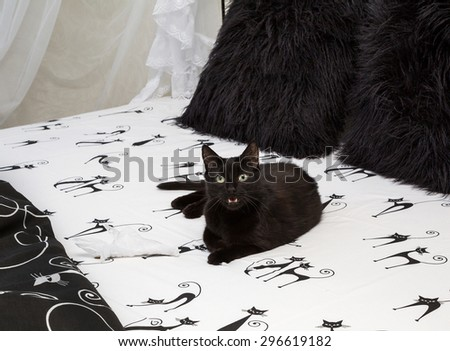 black domestic cat lying on the bed. animal, mammal - stock photo