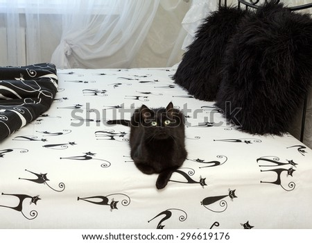 black domestic cat sitting on a bed. closeup. animal, mammal - stock photo