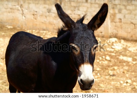 Black donkey on brown background - stock photo