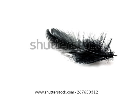 Black feather isolated on white blackground