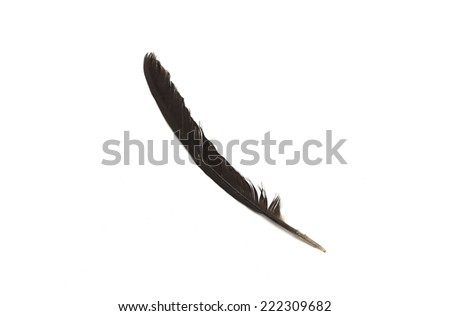 Black feather on a white background.  - stock photo