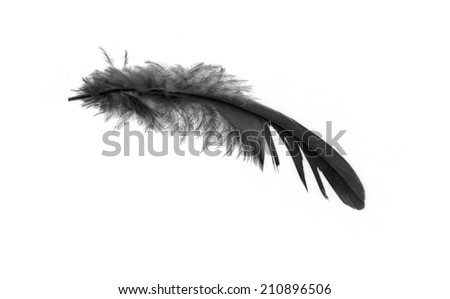 black feather on white background