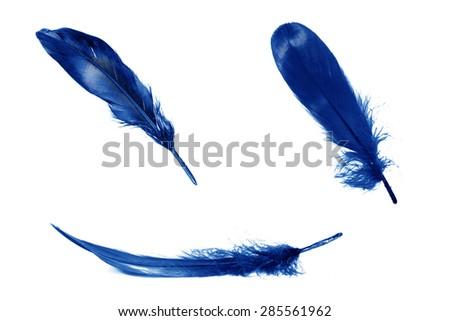 Black feathers on white background. - stock photo