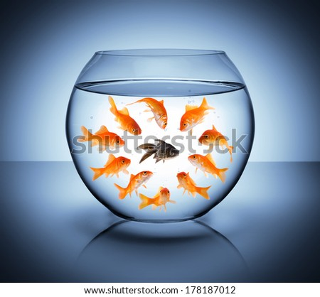 black fish  - diversity  concept, racism and isolation - stock photo