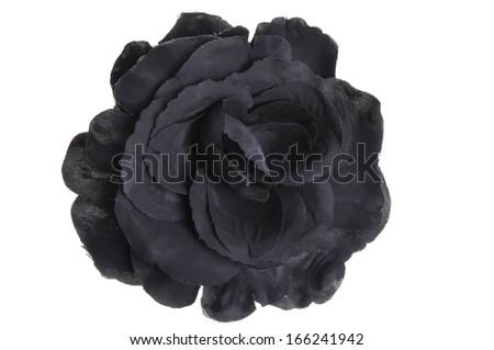 Black flower head rose on white background  - stock photo