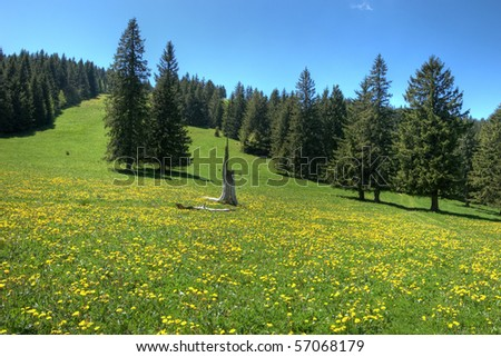black forest - stock photo