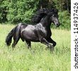 Black friesian stallion running - stock photo