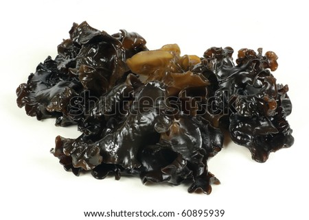 black fungus on white background - stock photo