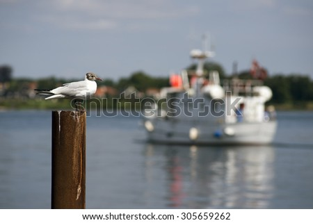 Black-headed gull on a rusty pole with blurred boat as a background - stock photo