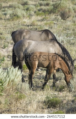 Black Hills Wild Horse Sanctuary, home to America's largest wild horse herd, Hot Springs, South Dakota - stock photo