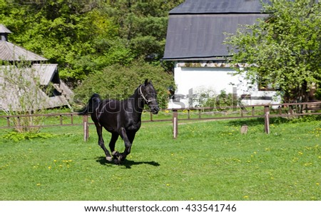 Black horse galloping across a meadow. - stock photo