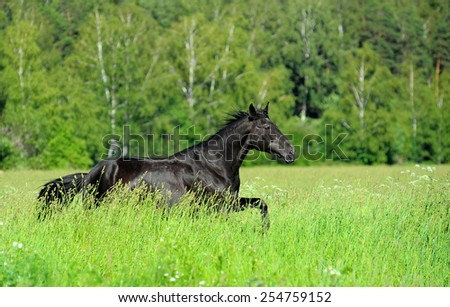 black horse in the field