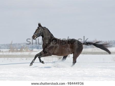 black horse in winter - stock photo